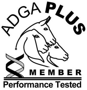ADGA Plus Logo