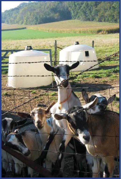 johne u0026 39 s disease - american dairy goat association