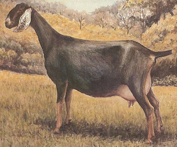 ADGA Recognized Breeds - American Dairy Goat Association - ADGA