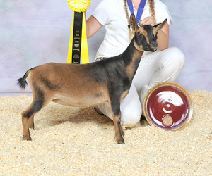 JUNIOR CHAMPION ALETHIA SHH SOMETHING BORROWED PAXSONKDZ