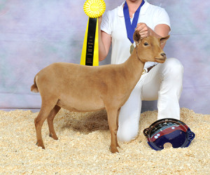 RESERVE JUNIOR CHAMPION ALETHIA M TINY DANCER ALITTA