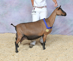 GRAND CHAMPION SGCH VANJUST TA BRAMBLE VANJUST
