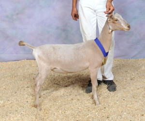 RESERVE JUNIOR CHAMPION TIDE LAND 2X XZZORA TIDE LAND