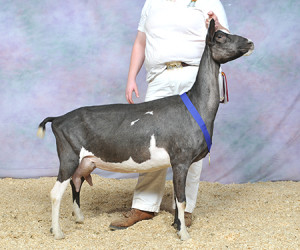 RESERVE GRAND CHAMPION KLISSE'S KPOH SALOME BRUCE & KLISSE FOSTER & FAMILY