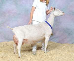 RESERVE GRAND CHAMPION SG VINEYARD VIEW FOXY VANA VINEYARD VIEW