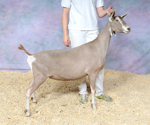 JUNIOR CHAMPION ROWE'S FLASH STARLET ROWE'S