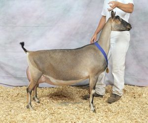 ALPINE RESERVE GRAND CHAMPION