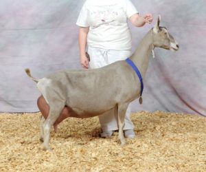 TOGGENBURG RESERVE GRAND CHAMPION